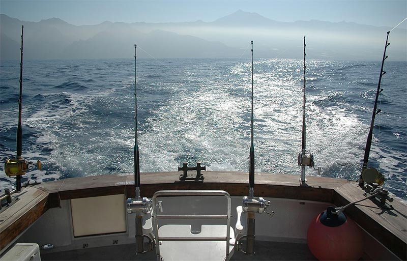 Fishing spots in auckland for Fishing charters auckland